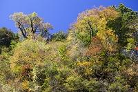 大分県 九酔渓の紅葉