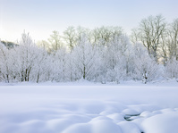 霧氷の雪景色