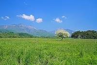 山梨県 八ヶ岳牧場と八ヶ岳 ズミ(コナシ)の木