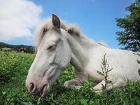 牧場の白馬