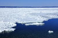 北海道 流氷 オホーツク海 世界自然遺産