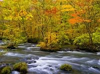 青森県 奥入瀬渓流の紅葉