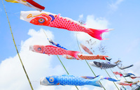 大空に舞う鯉のぼり