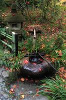 京都府 祇王寺 紅葉の手水鉢