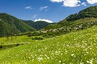 アルメニア ロリ地方 デベデ峡谷 牧草地