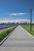 豊洲ぐるり公園の遊歩道と晴海方面のビル群