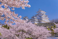 兵庫県 桜咲く姫路城