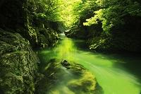 新潟県 長瀞 新緑 仙見川渓谷 流れ