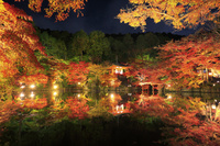京都府 醍醐寺 紅葉のライトアップと弁天堂