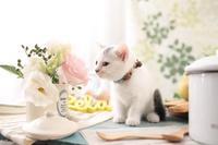 雑種 子猫