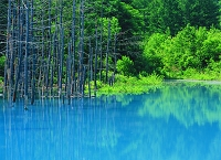 北海道・美瑛町 青い池