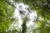 鹿児島県 金作原原生林