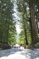栃木県 日光東照宮 表参道と杉並木