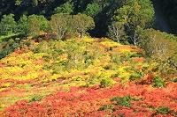 北海道 大雪山・銀泉台の紅葉