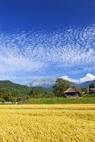鳥取県 江府町 田園と大山