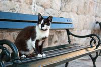 ドゥブロヴニクのベンチに佇む黒白ネコ