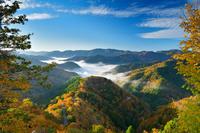 滋賀県 高島市 おにゅう峠の雲海と紅葉