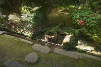京都府 龍安寺 つくばい