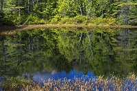 長野県 森と牛留池水鏡