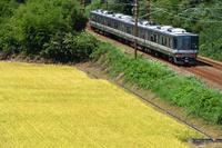 滋賀県 北陸本線 色づいた田園地帯を走る223系新快速電車(後...