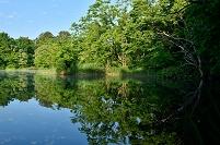福島県 磐梯朝日国立公園 裏磐梯 秋元湖付近の池