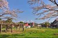 岩手県 小岩井農場と桜と岩手山