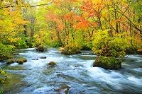 青森県 奥入瀬渓流 三乱の流れの紅葉