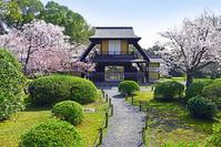 京都府 京都市 渉成園 (枳殻邸) 傍花閣  桜