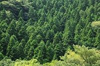 静岡県 伊豆市 天城の山