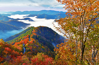 滋賀県 高島市 錦秋のおにゅう峠からの雲海