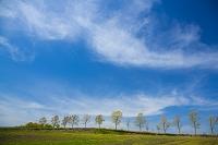 大分県 筋雲と並木