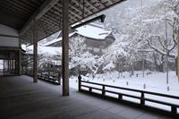 京都府 常照皇寺 方丈から見る雪の怡雲庵と九重桜