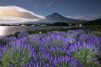 山梨県 月夜のラベンダー畑と富士山