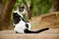 沖縄県 野良猫