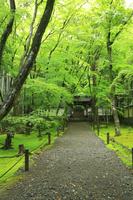 京都府 新緑の地蔵院参道と山門