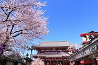 東京都 浅草寺 桜咲く仲見世と宝蔵門