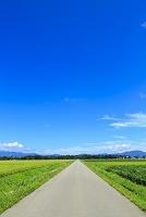 福島県 会津若松市 田園 道