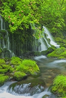 秋田県 ツツジ咲く元滝伏流水