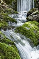 福井県 若狭町 苔岩と流れ