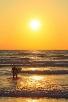 静岡県 伊豆白浜 朝日に輝く海とサーファー