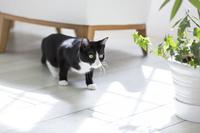 身をかがめる猫