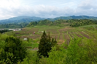 山形県 朝日町 春のくぬぎ平の棚田