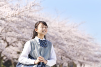 満開の桜と日本の中学生