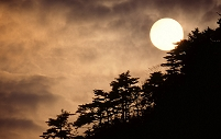満月と林のシルエット