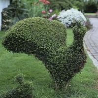 イングリッシュ・ガーデン 鳥のトピアリー