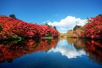 長野県 軽井沢 雲場池