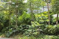 シンガポールの都市の緑化