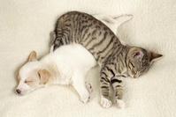 寄り添って眠る子犬と子猫
