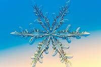 顕微鏡写真 雪の結晶 樹枝状六花