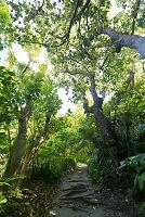 東京都 小笠原 父島 小港海岸 中山峠への道 森林生態系保護...